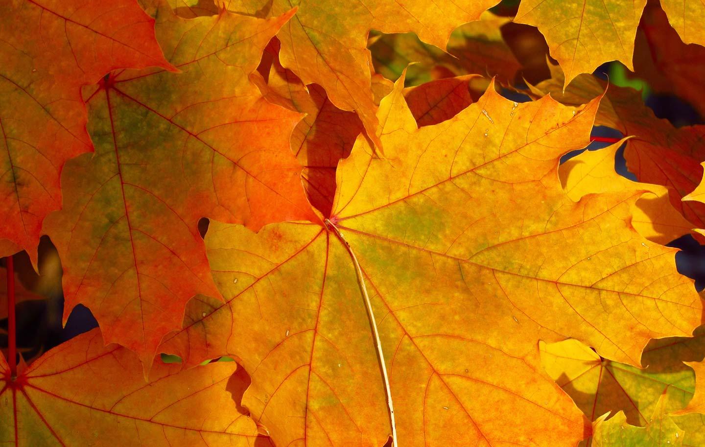 autumn-winter-opening