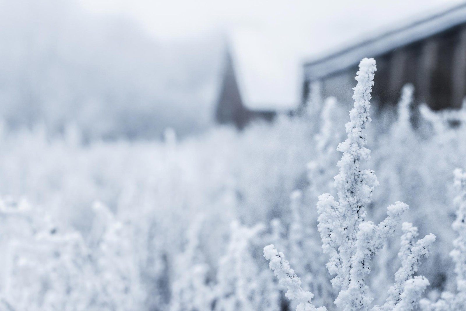 just-ceramics-snow-day